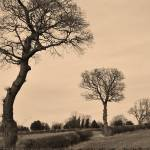 """Sepia Silhouette Trees"" by shieladixon"