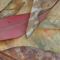 Leaf Abstract