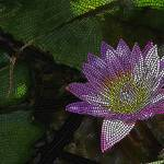 """mosaic - ""Water Lily"" (horizontal)"" by kinnally"