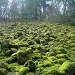 """Mossy Rocks of Burney Falls, CA"" by JewelsOfDenile"