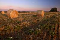 Gillespie County Sunrise: Field of Hay 2