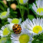 """All About LadyBugs"" by Photographybyjim"