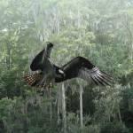 """Osprey over Lake Tarpon"" by spadecaller"