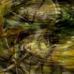 """Autoregenesis V2"" by RonErickson"