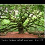 """Angel Oak Proverbs 3:5"" by kenrainwaterphotography"