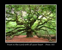 Angel Oak Proverbs 3:5