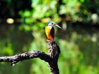 My Friend The Kingfisher