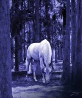 White Horse in Cypress Forest