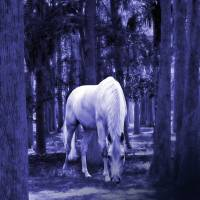 White Horse in Cypress Forest by I.M. Spadecaller