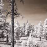 """Bryce Canyon Trees Infrared"" by miir"