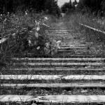 """tracks..."" by rathompson"