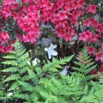"""""""Ferns and Flowers"""" by Charlsiesprewell"""