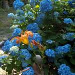 """Orange Lilly"" by Charlsiesprewell"