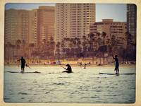 Long Beach Paddle Boarders