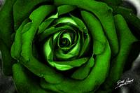 Watercolor Rose Green