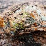 """Mossy Rock"" by ksummers"