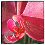 """""""Bird in the Orchid"""" by GiorgettaMcRee"""