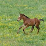 """Running Foal"" by WildAboutNaturePhotography"