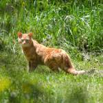 """Feral Cat"" by WildAboutNaturePhotography"
