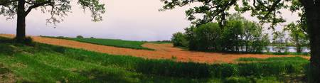 Golden Farm Field Panorama