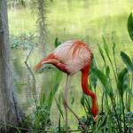 """""""Flamingo Bay"""" by spadecaller"""
