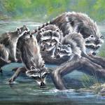 """Raccoon Family"" by DCHeslin"