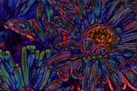 Blue And Red Daisy Abstract 24x36