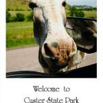 """Welcome to Custer State Park - Poster"" by DryFlyPhotograhy"