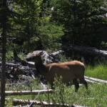 """""""Elk"""" by dunklebob"""