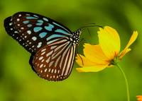 Ijust another butterfly?