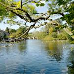"""Bakewell Riverside, Through The Branches (20644-R)"" by rodjohnson"