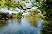 Bakewell Riverside, Through The Branches (20644-R)