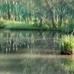 """""""swamp 1"""" by imagineit"""