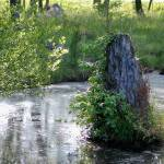 """vine covered stump"" by imagineit"