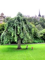Playing in Edinbourgh