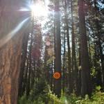 """Sun Through the Trees"" by katielynn21"