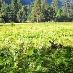 """""""Doe in the Meadow"""" by katielynn21"""
