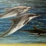 """Dolphin Trio"" by ginster"