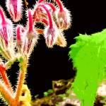 """""""Plant"""" by pvalentega"""