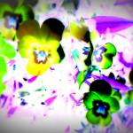 """Violets"" by paulihyvonen"