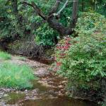 """Autumn stream"" by anna_williams"