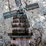 """Infrared WindMill"" by photocatphoto"