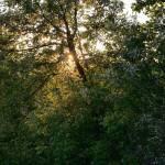 """Sunny Peek"" by edgabel"