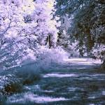 """Infrared Morning"" by photocatphoto"