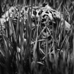 """""""Stalker"""" by DNA-ARTS"""