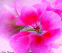Pink Flower Painterly