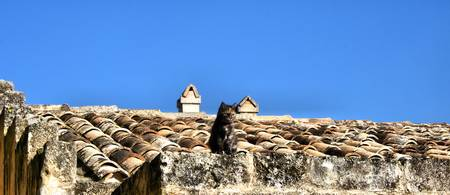 Cat on the roof - mimetism