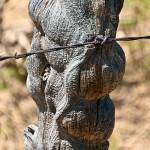"""Old Fence post"" by SamSherman"