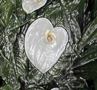 White Flower One Abstract