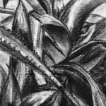 """""""Plant Study"""" by karaholmstrom"""